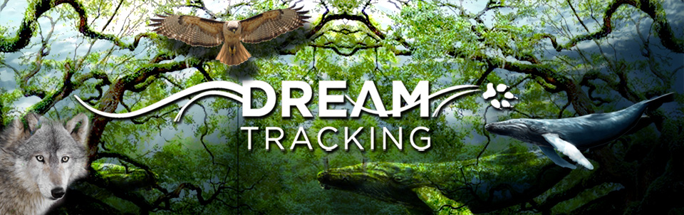 Bambi Corso, Dream Tracking